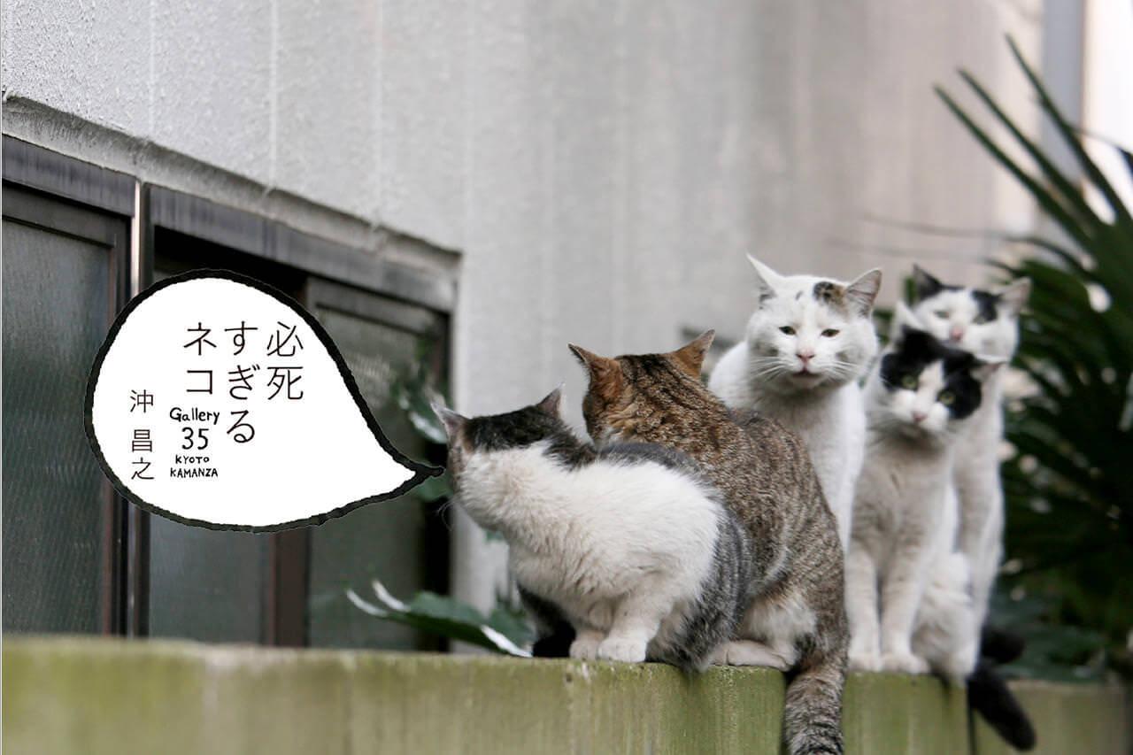 『必死すぎるネコ』出版記念 沖昌之 個展