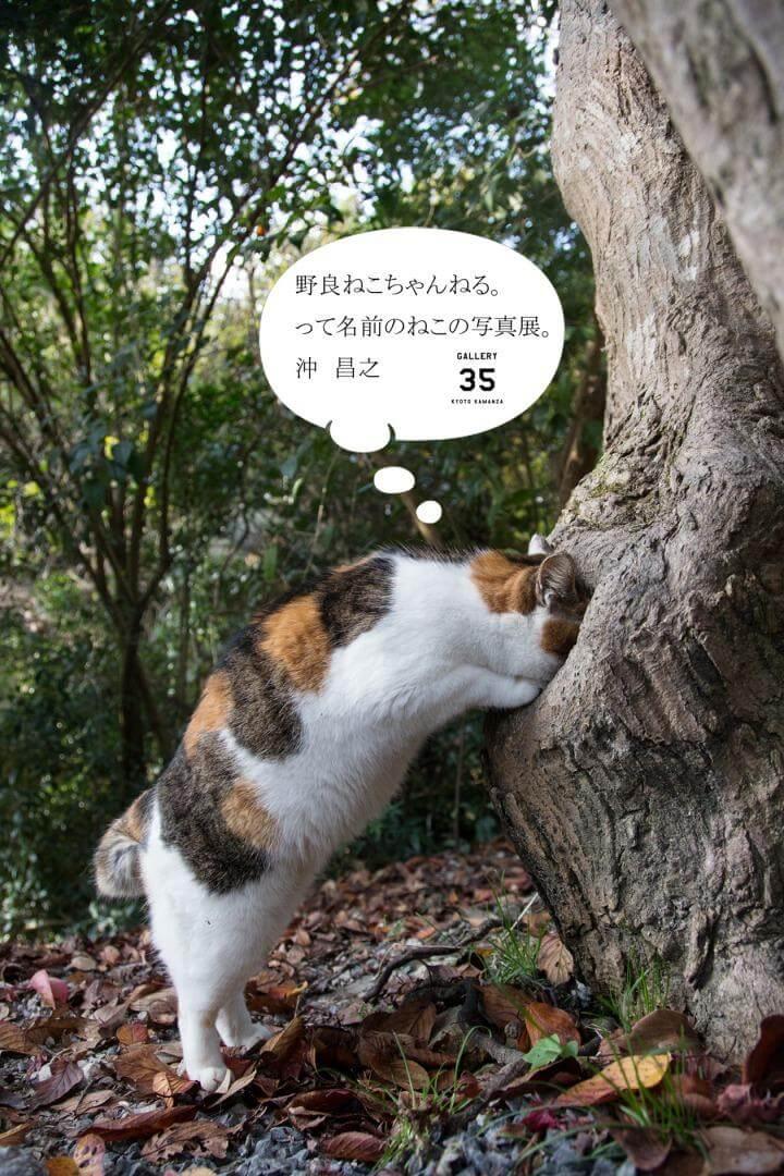 野良猫写真家・沖昌之さんの<br />写真展を開催